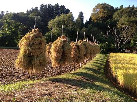 花巻 稲刈り