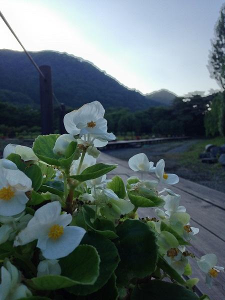 花と緑のまつり2014